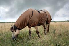 Pferd, das süße Juckendecke trägt Lizenzfreie Stockbilder