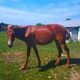 Pferd, das Sie (Kind, betrachtet) Lizenzfreies Stockbild