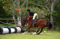 Pferd, das Sprung ablehnt Lizenzfreie Stockbilder
