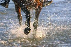 Pferd, das am Strand am Sonnenaufgang galoppiert Lizenzfreies Stockfoto