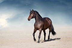 Pferd, das in Wüste trottet stockfoto