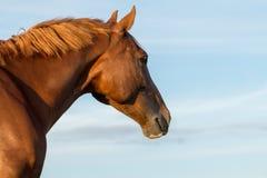 Pferd, das weg schaut lizenzfreie stockfotos