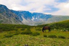 Pferd in den Bergen, im Hintergrund ein Gebirgstal in den Wolken lizenzfreie stockfotografie