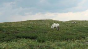 Pferd in den Bergen, im Hintergrund ein Gebirgstal in den Wolken stock footage