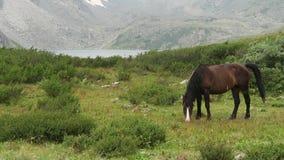 Pferd in den Bergen, im Hintergrund ein Gebirgstal in den Wolken stock video footage