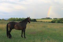 Pferd, den Regenbogen beobachtend Stockfotografie