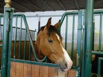 Pferd an den Ställen Lizenzfreie Stockfotos