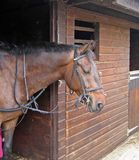 Pferd in den Ställen Lizenzfreies Stockfoto