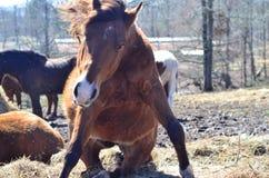 Pferd in der Bewegung stockfotografie