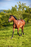 Pferd in der grünen Natur lizenzfreie stockbilder