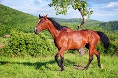 Pferd in der grünen Natur stockbilder