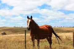 Pferd in der Landlandschaft Stockbild