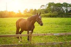 Pferd in der Morgenleuchte Stockfotos