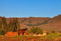 Pferd in der schönen Morgenleuchte Stockfoto