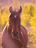 Pferd in der schönen Wiese Stockfotos