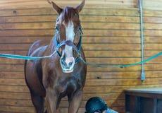 Pferd in der Unterbrechung lizenzfreie stockfotos