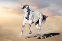 Pferd in der Wüste lizenzfreie stockfotos
