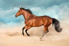 Pferd in der Wüste lizenzfreies stockbild
