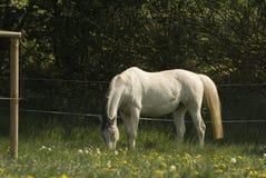 Pferd in der Weide Lizenzfreie Stockfotografie