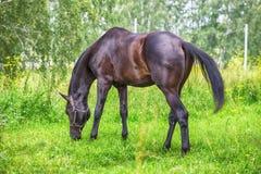 Pferd an der Wiese stockfotografie