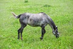 Pferd an der Wiese lizenzfreie stockfotografie