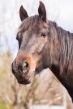 Pferd in der wilden Natur Lizenzfreie Stockbilder