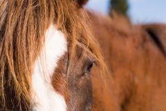 Pferd in der wilden Natur Lizenzfreies Stockfoto
