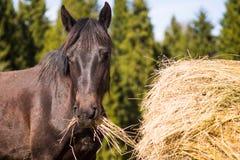 Pferd in der wilden Natur Lizenzfreie Stockfotos