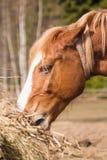 Pferd in der wilden Natur Lizenzfreies Stockbild