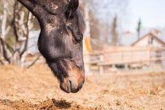 Pferd in der wilden Natur Lizenzfreie Stockfotografie