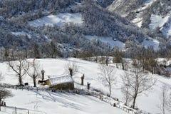 Pferd in der Winterlandschaft stockbild