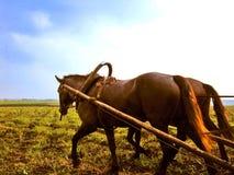 Pferd des russischen Dorfs Stockbilder