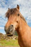Pferd durch die Sonne lizenzfreies stockbild