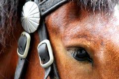 Pferd in einem harness_7 Lizenzfreies Stockfoto