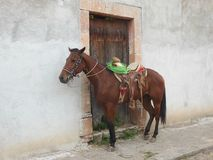 Pferd in einem mexikanischen Pueblo lizenzfreie stockfotos