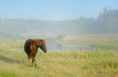Pferd in einem Nebel Stockfoto