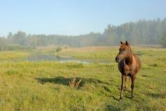 Pferd an einem Sonnenaufgang Lizenzfreie Stockfotografie