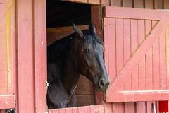 Pferd in einem Stall Lizenzfreie Stockfotografie