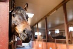 Pferd in einem Stall Stockbilder