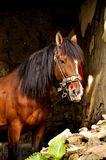 Pferd in einem Stall lizenzfreie stockbilder