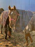 Pferd in einem Stall stockbild