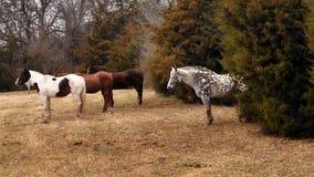 Pferd einer anderen Farbe Lizenzfreie Stockfotografie
