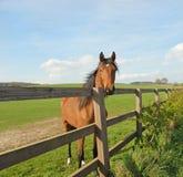 Pferd in einer landwirtschaftlichen Einstellung Stockbild