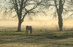 Pferd in einer Wiese Lizenzfreie Stockfotos