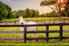 Pferd eines Bauernhofes Stockbild
