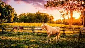 Pferd eines Bauernhofes Stockbilder