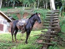 Pferd in El Castillo Nicaragua lizenzfreie stockbilder