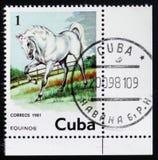 Pferd, Equus Ferus Caballus, circa 1981 Stockfotos