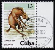 Pferd, Equus Ferus Caballus, circa 1981 Stockbilder