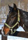 Pferd erwartet Reiten Stockbilder